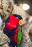 Parrot perched on a branch royalty free stock image