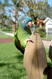 Parrot perched on fence. Colorful parrot perched on fence outdoors Stock Images
