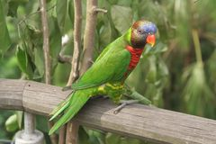 Parrot perching Stock Images
