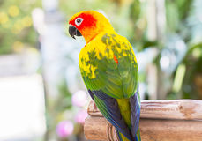 Parrot perching on blurred garden background Stock Photography