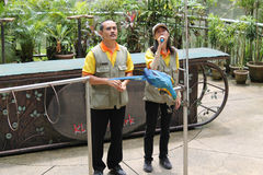 Parrot perform with Trainers Stock Images