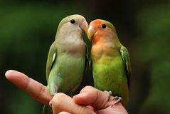 Parrot pet. Parrot and hand in the parks Royalty Free Stock Photography