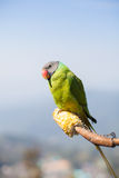 Parrot. Pet beautiful intelligent calm Stock Photos
