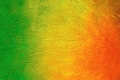 Parrot plumage background. Colorful plumage of tropical birds Stock Photography