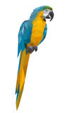 parrot polygon style Royalty Free Stock Photo