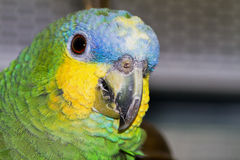 Parrot portait Stock Photos