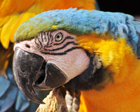 Parrot Portrait Stock Photo