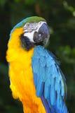 Parrot. A portrait of a beautiful parrot Stock Image