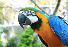 Parrot Portrait Stock Photo