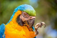 Parrot portrait stock photos