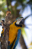 Parrot portrait Royalty Free Stock Photo