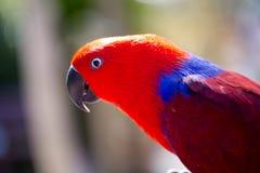 Parrot portrait of bird. Wildlife scene from tropic nature. Stock Photo