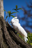 Parrot portrait of bird. Wildlife scene from tropic nature. Stock Photos