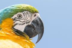 Parrot portrait Stock Images