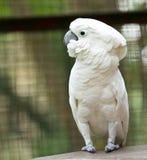 Parrot. Portrait of a white parrot stock image