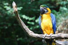 Parrot in Prague ZOO. In Czech republic Royalty Free Stock Photography