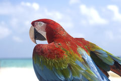 Parrot profile. Profile of colourful tropical parrot Royalty Free Stock Photography