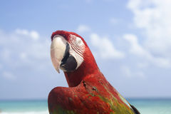 Parrot profile. Profile of colourful tropical parrot Stock Photos