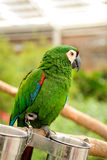 The parrot. He parrot is Psittaciformes (scientific name: Psittaciformes) many gorgeous, barking bird feathers.Typical PanQin, on foot toe type, two toes forward Royalty Free Stock Photography