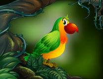 A parrot at the rain forest Stock Image