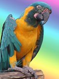 Parrot in the rainbow royalty free stock photos