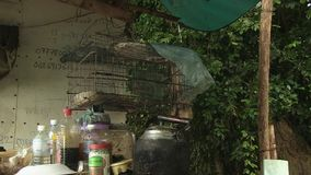 Parrot , raining , cage , cambodia, southeast asia stock video footage