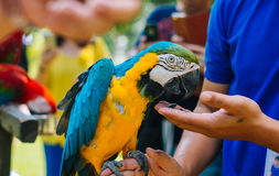 A Parrot. Relax with tourism royalty free stock photos