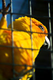 Parrot in the Russian Park. Royalty Free Stock Photography