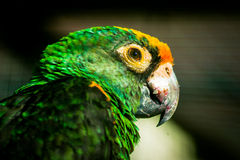 Parrot in the Russian Park. Royalty Free Stock Photo