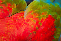 Parrot's feathers background Royalty Free Stock Photo