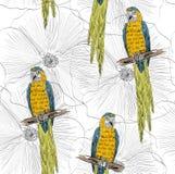 Parrot. Seamless pattern Stock Photo