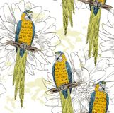 Parrot. Seamless pattern Stock Image