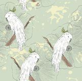 Parrot. Seamless pattern Stock Images
