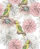 Parrot. Seamless pattern Royalty Free Stock Photos