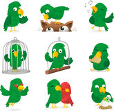 Parrot set. Cartoon parrot collection. Parrot, parakeet, love-bird, cockatoo, polly, imitate caricature, in different scenes like, standing parrot, standing on Stock Photos