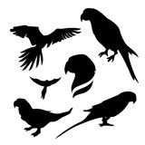 Parrot set vector. Parrot set of silhouettes, vector royalty free illustration