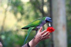 Parrot show Royalty Free Stock Photos