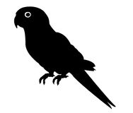 Parrot silhouette. Vector file of parrot silhouette Stock Image