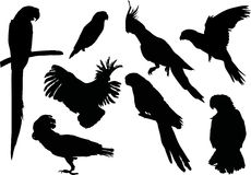 Parrot silhouettes collection Stock Photo