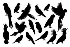 Parrot silhouettes on white background. Vector parrot silhouettes of amazon jungle isolated on white background Royalty Free Stock Photo
