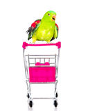 Parrot siting on shopping trolley. isolated on white background Royalty Free Stock Images