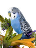 Parrot sits on a flower Stock Photo