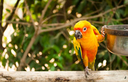 Parrot sitting on the perch Stock Images