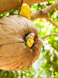 Parrot sitting on the perch Royalty Free Stock Images