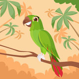 Parrot Sitting on Tree Branch Colorful Tropical Royalty Free Stock Photography