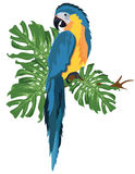 Parrot sitting on a tree branch isolated. Vector tropical birds Stock Photo