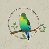 Parrot sketch. Decorative bird Royalty Free Stock Photo