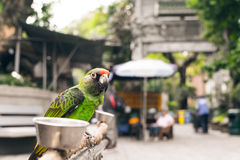 Parrot stand at the bird street Stock Image