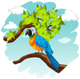 Parrot standing on branch. Illustration Stock Photos