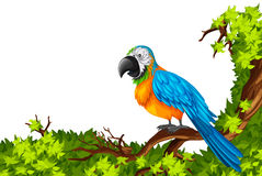 Parrot standing on branch. Illustration Royalty Free Stock Photos